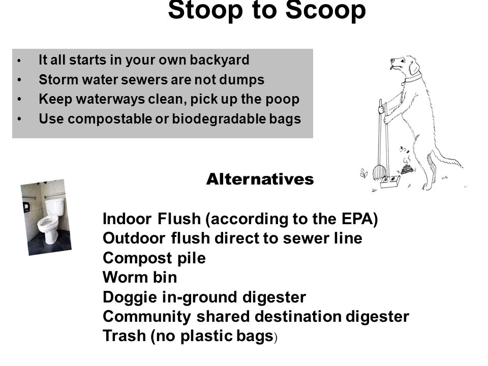 Stoop to Scoop It all starts in your own backyard Storm water sewers are not dumps Keep waterways clean, pick up the poop Use compostable or biodegradable bags Alternatives Indoor Flush (according to the EPA) Outdoor flush direct to sewer line Compost pile Worm bin Doggie in-ground digester Community shared destination digester Trash (no plastic bags )