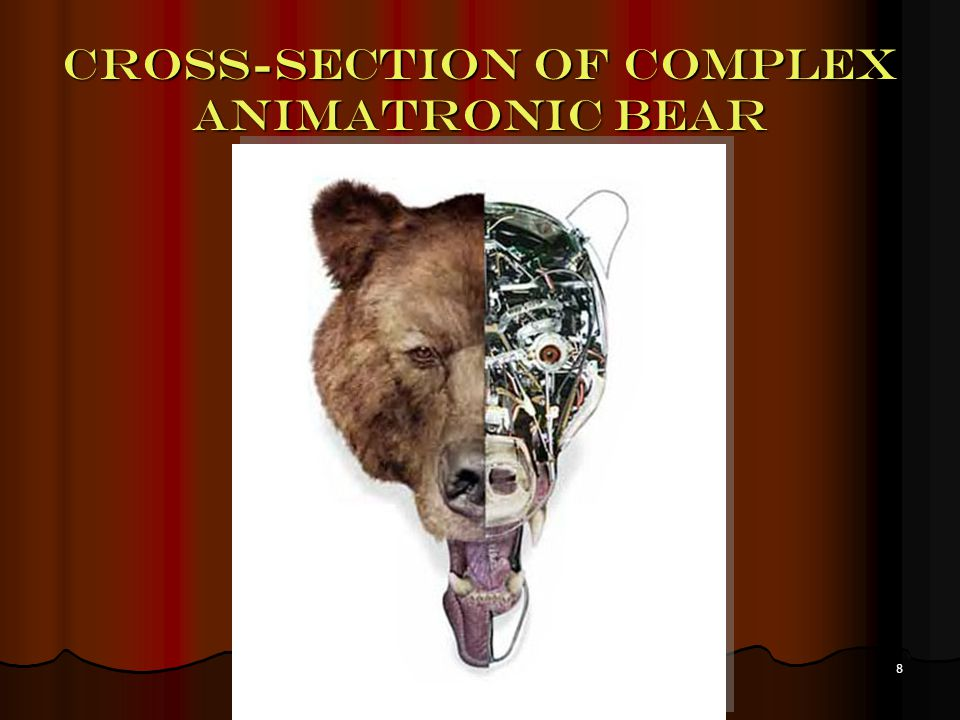 8 Cross-section of complex animatronic bear