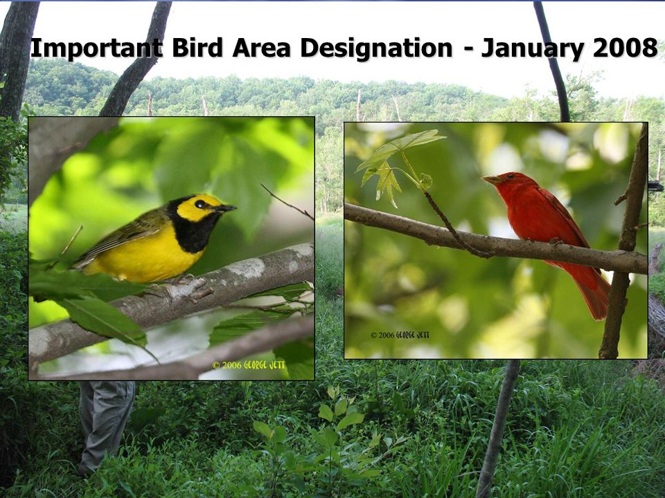 Important Bird Area Designation - January 2008