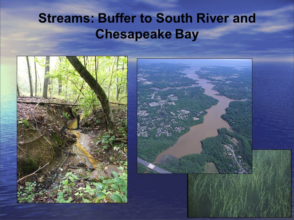 Streams: Buffer to South River and Chesapeake Bay