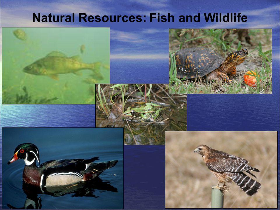Important Bird Area Designation - January 2008