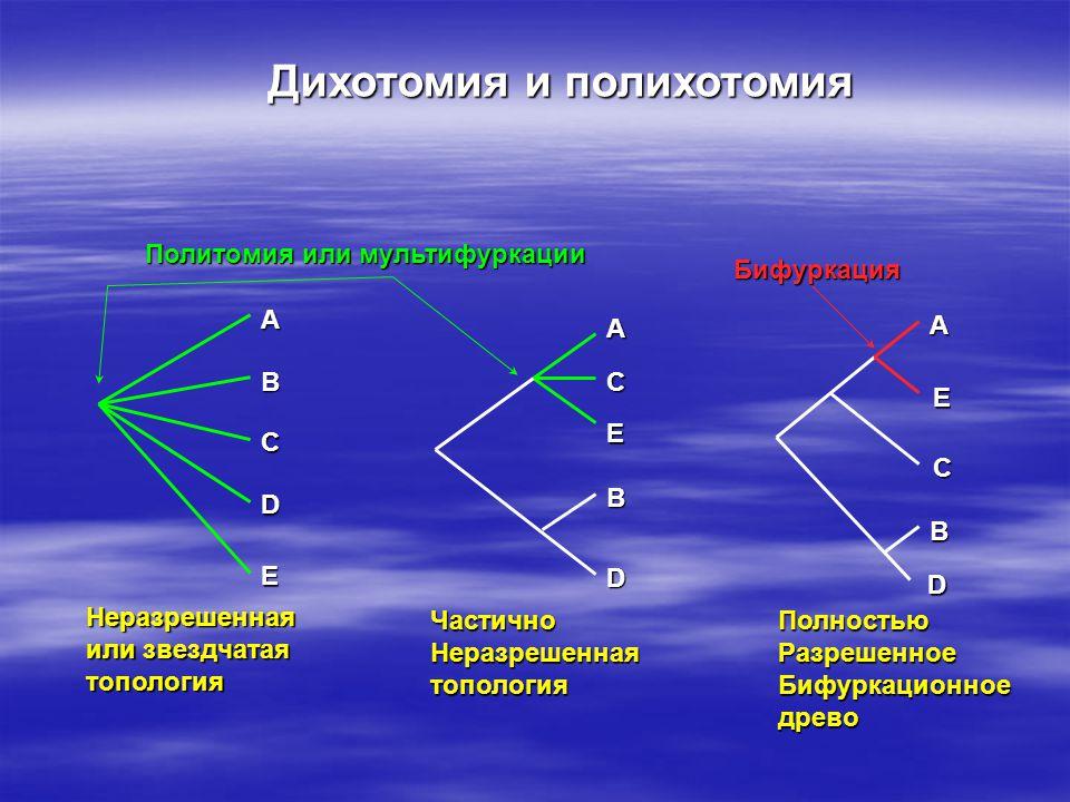 A B C D E Неразрешенная или звездчатая топология A C E B D ЧастичноНеразрешеннаятопология Политомия или мультифуркации A E C B D ПолностьюРазрешенноеБифуркационноедрево Бифуркация Дихотомия и полихотомия