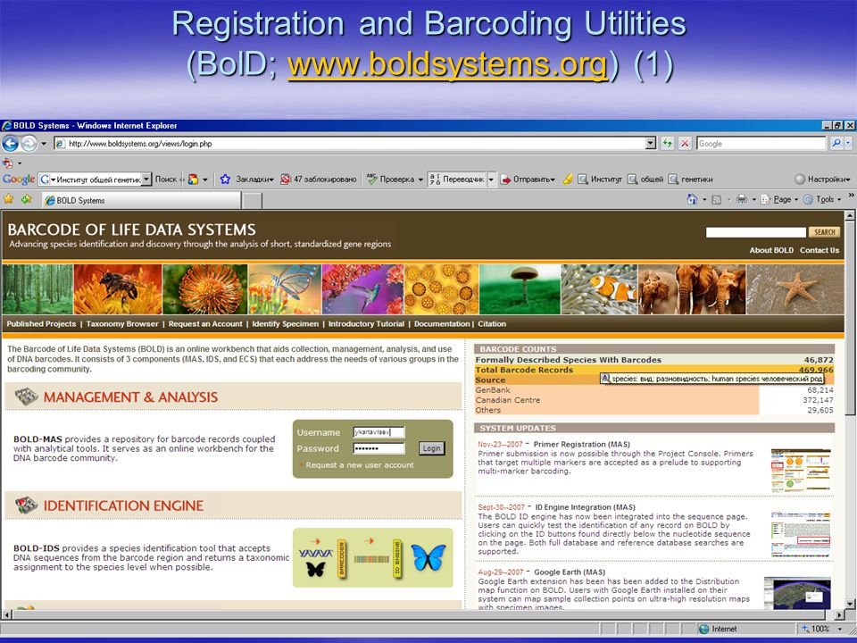 Registration and Barcoding Utilities (BolD; www.boldsystems.org) (1) w w.boldsystems.orgw w.boldsystems.org