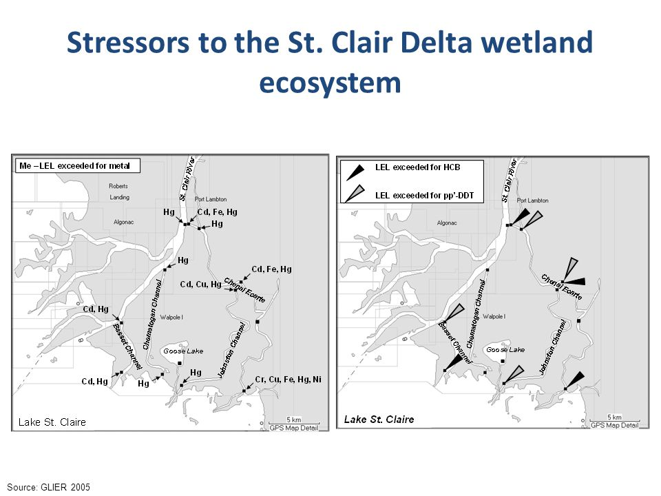 Stressors to the St. Clair Delta wetland ecosystem Source: GLIER 2005