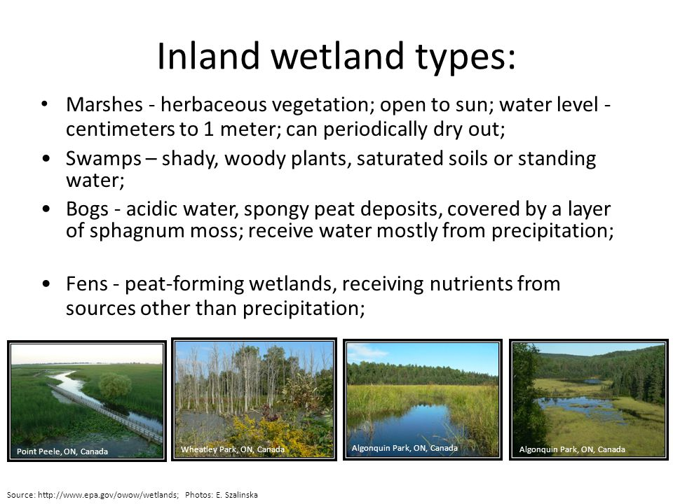 Inland wetland types: Marshes - herbaceous vegetation; open to sun; water level - centimeters to 1 meter; can periodically dry out; Source: http://www.epa.gov/owow/wetlands; Photos: E.