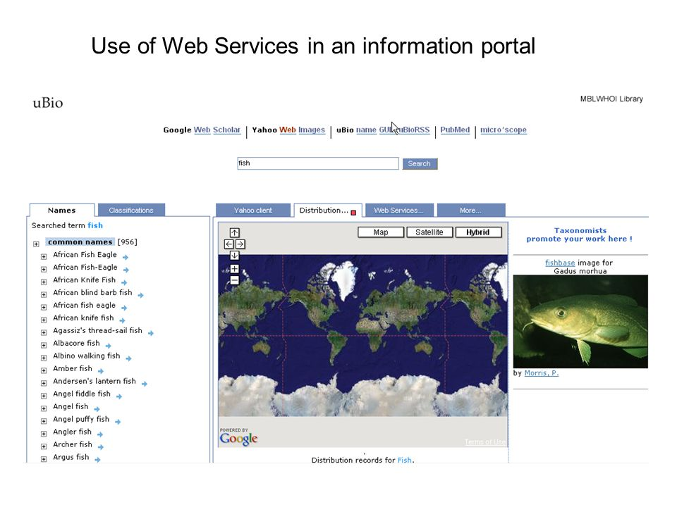 Use of Web Services in an information portal