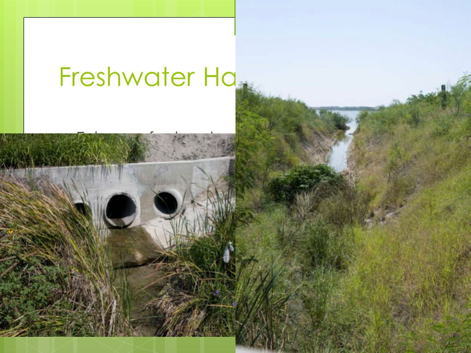 Enhance freshwater vegetation around drain Re-contour drainage slopes and re- vegetate for stabilization and habitat diversity Freshwater Habitats