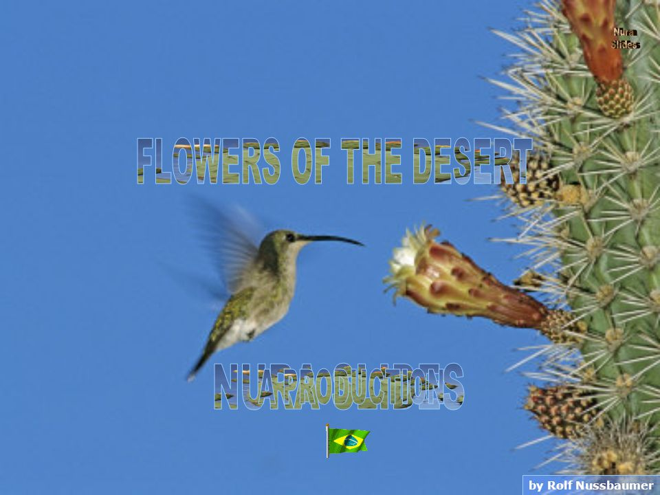 Desert Gold Wildflower Bud Death Valley National Park California - USA by Jamie & Judy Wild