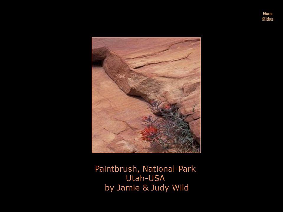 Pink Flower Hedgehog Cactus Anza Borrego Desert State Park California by Tim Laman