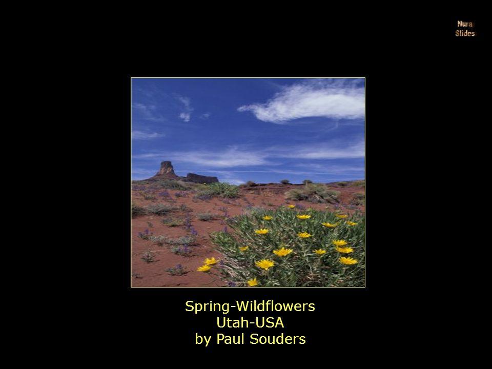Paintbrush, National-Park Utah-USA by Jamie & Judy Wild