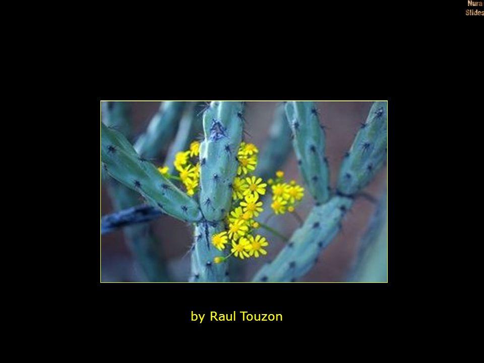 Desert Wildflowers Death Valley National Park California Photographic Print