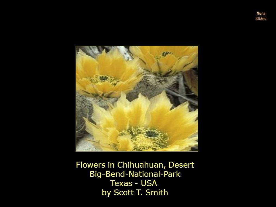 Hearty Wild Stock Wildflowers by Jason Edwards