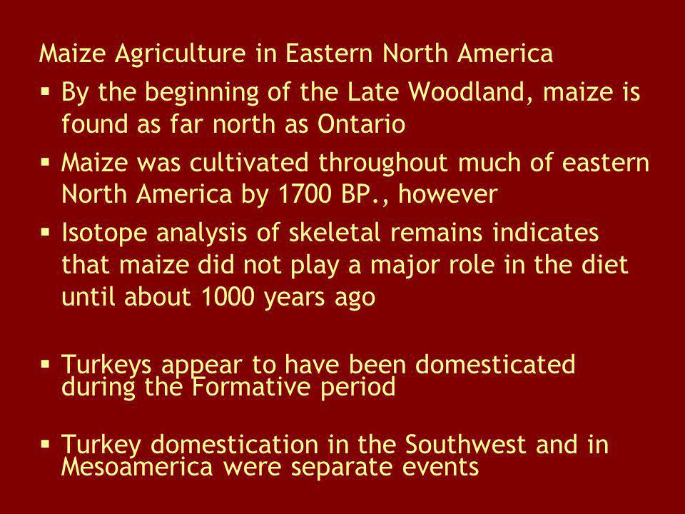 Maize Agriculture in Eastern North America By the beginning of the Late Woodland, maize is found as far north as Ontario Maize was cultivated througho