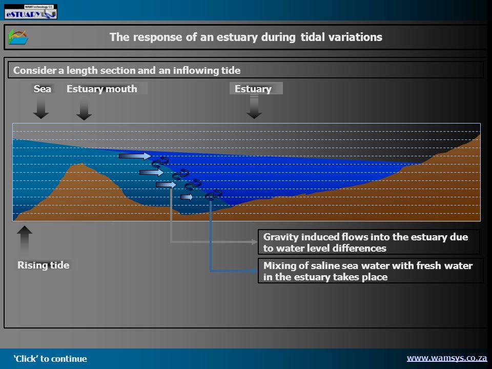 Click to continue www.wamsys.co.za The response of an estuary during tidal variations Consider a length section and an inflowing tide Gravity induced flows into the estuary due to water level differences Mixing of saline sea water with fresh water in the estuary takes place SeaEstuaryEstuary mouth Rising tide