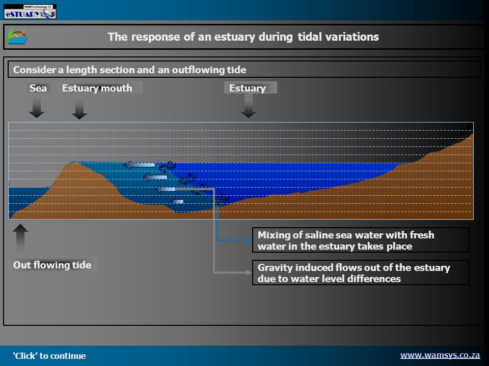 Click to continue   The response of an estuary during tidal variations Consider a length section and an outflowing tide Gravity induced flows out of the estuary due to water level differences Mixing of saline sea water with fresh water in the estuary takes place SeaEstuaryEstuary mouth Out flowing tide