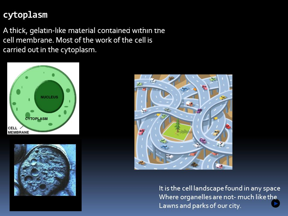 A thick, gelatin-like material contained within the cell membrane. Most of the work of the cell is carried out in the cytoplasm. cytoplasm 1.2 Microsc