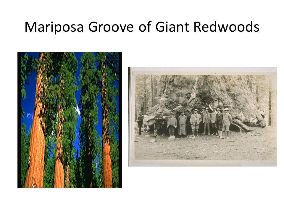 Mariposa Groove of Giant Redwoods