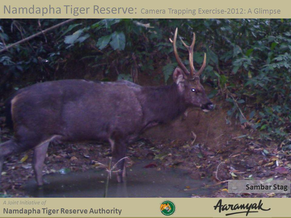 Sambar Stag Namdapha Tiger Reserve: Camera Trapping Exercise-2012: A Glimpse A Joint Initiative of Namdapha Tiger Reserve Authority