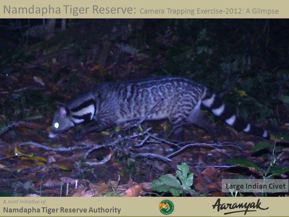 Large Indian Civet Namdapha Tiger Reserve: Camera Trapping Exercise-2012: A Glimpse A Joint Initiative of Namdapha Tiger Reserve Authority