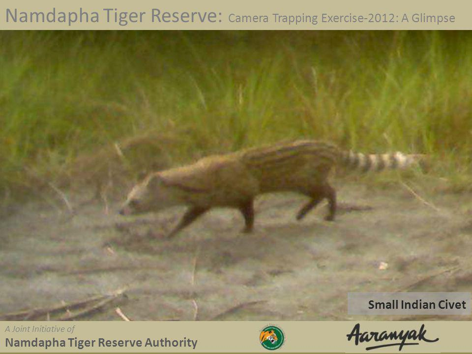 Small Indian Civet Namdapha Tiger Reserve: Camera Trapping Exercise-2012: A Glimpse A Joint Initiative of Namdapha Tiger Reserve Authority