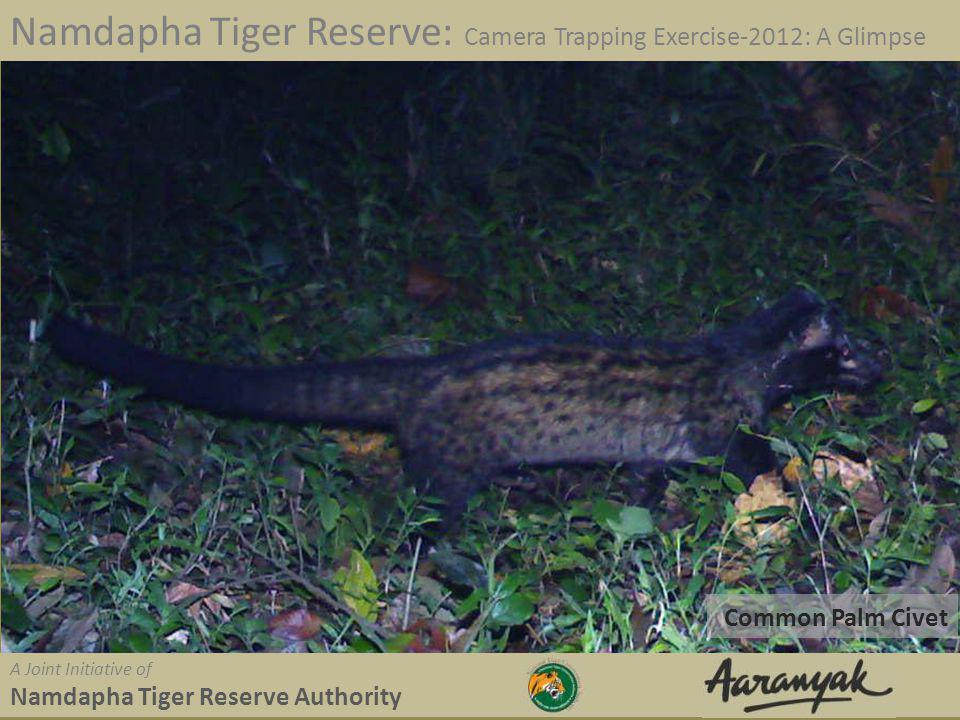 Common Palm Civet Namdapha Tiger Reserve: Camera Trapping Exercise-2012: A Glimpse A Joint Initiative of Namdapha Tiger Reserve Authority