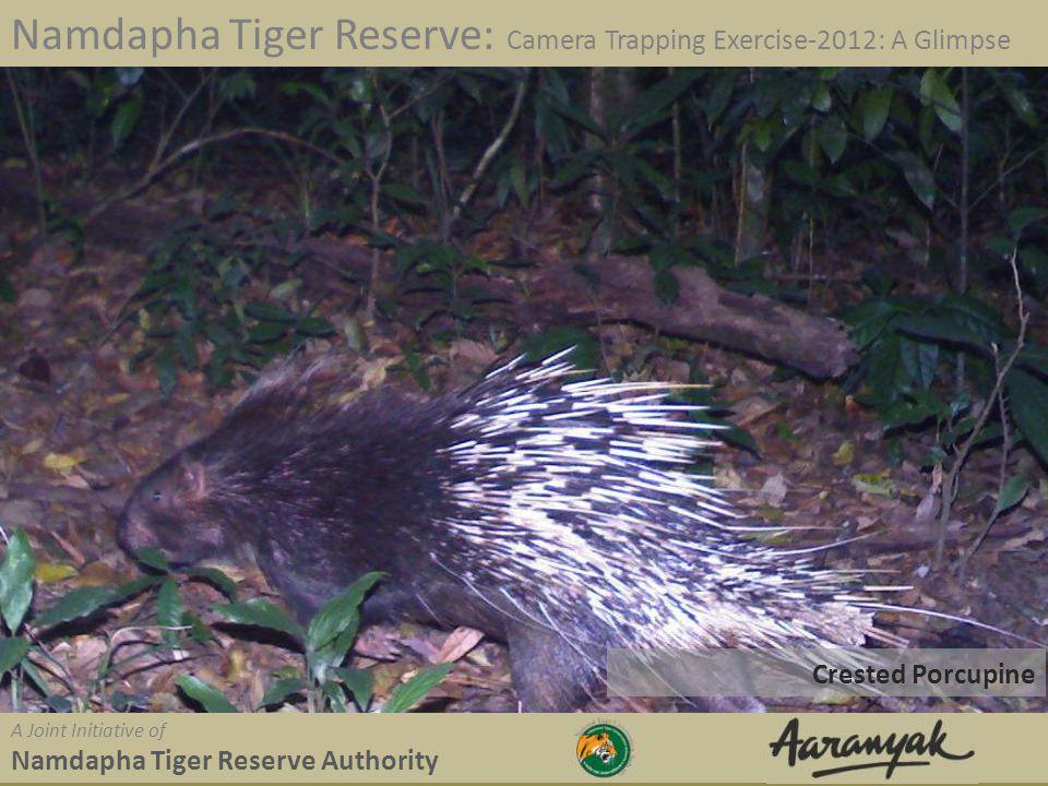 Crested Porcupine Namdapha Tiger Reserve: Camera Trapping Exercise-2012: A Glimpse A Joint Initiative of Namdapha Tiger Reserve Authority