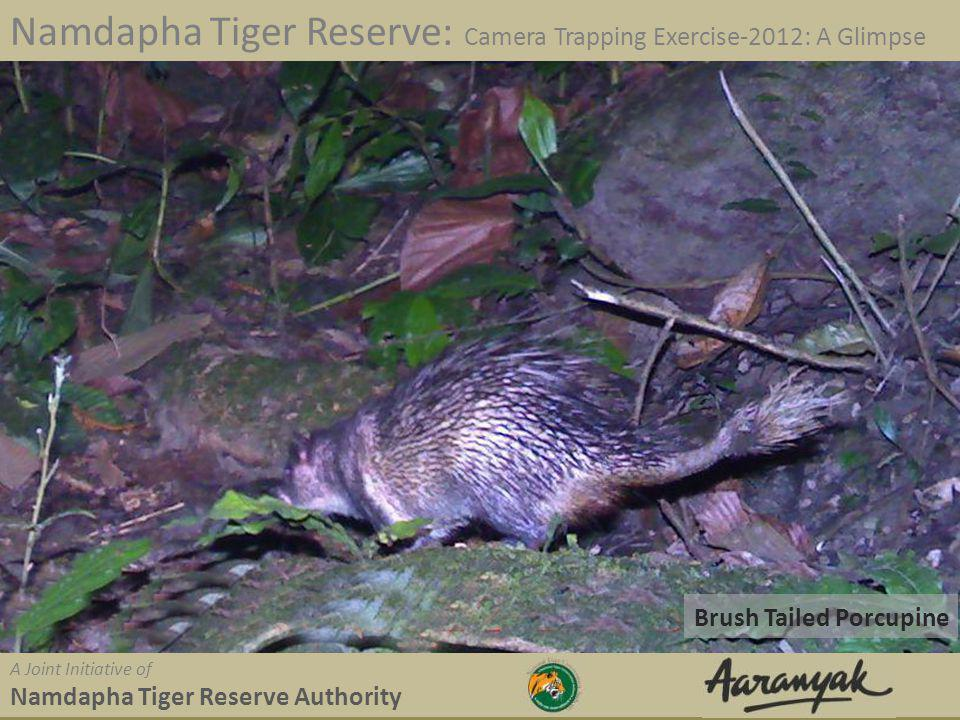 Brush Tailed Porcupine Namdapha Tiger Reserve: Camera Trapping Exercise-2012: A Glimpse A Joint Initiative of Namdapha Tiger Reserve Authority
