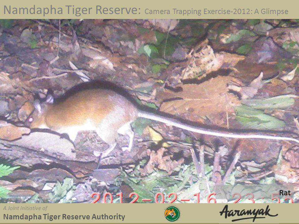 Rat Namdapha Tiger Reserve: Camera Trapping Exercise-2012: A Glimpse A Joint Initiative of Namdapha Tiger Reserve Authority