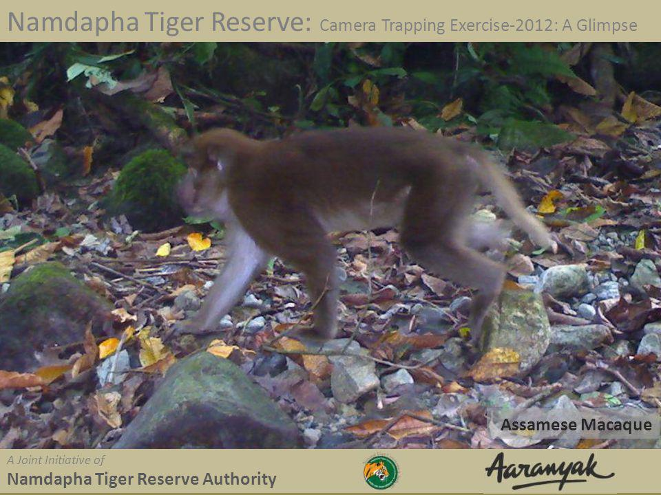 Assamese Macaque Namdapha Tiger Reserve: Camera Trapping Exercise-2012: A Glimpse A Joint Initiative of Namdapha Tiger Reserve Authority