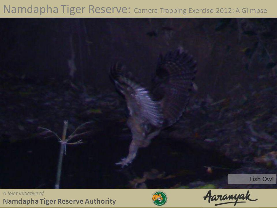 Fish Owl Namdapha Tiger Reserve: Camera Trapping Exercise-2012: A Glimpse A Joint Initiative of Namdapha Tiger Reserve Authority