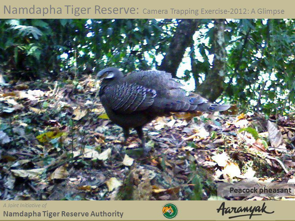 Peacock pheasant Namdapha Tiger Reserve: Camera Trapping Exercise-2012: A Glimpse A Joint Initiative of Namdapha Tiger Reserve Authority