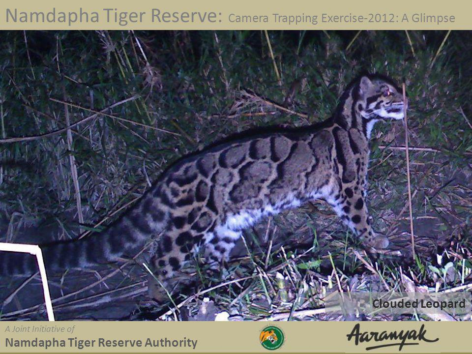 Clouded Leopard Namdapha Tiger Reserve: Camera Trapping Exercise-2012: A Glimpse A Joint Initiative of Namdapha Tiger Reserve Authority