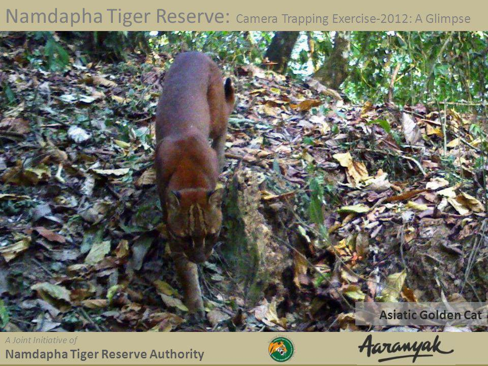 Asiatic Golden Cat Namdapha Tiger Reserve: Camera Trapping Exercise-2012: A Glimpse A Joint Initiative of Namdapha Tiger Reserve Authority