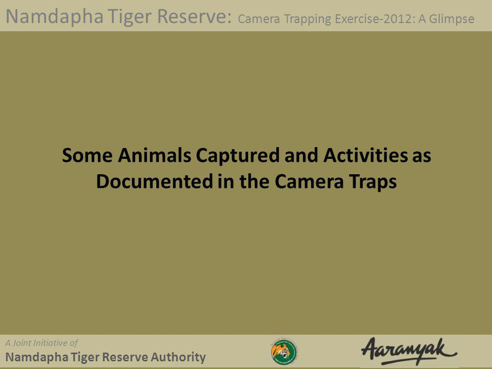 Visitor in the park Namdapha Tiger Reserve: Camera Trapping Exercise-2012: A Glimpse A Joint Initiative of Namdapha Tiger Reserve Authority