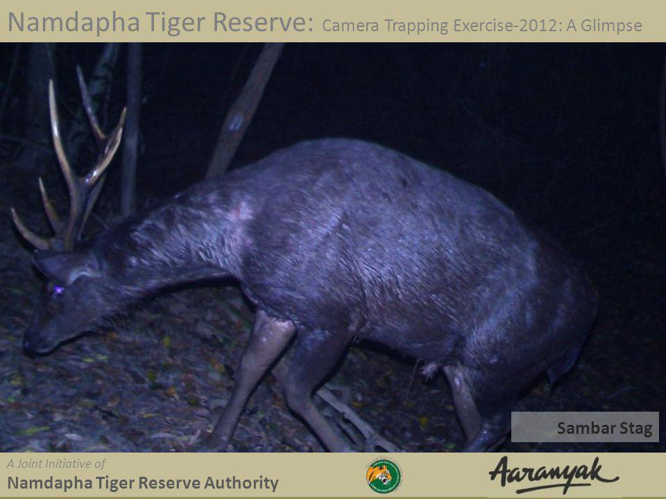 Hog Badger Namdapha Tiger Reserve: Camera Trapping Exercise-2012: A Glimpse A Joint Initiative of Namdapha Tiger Reserve Authority