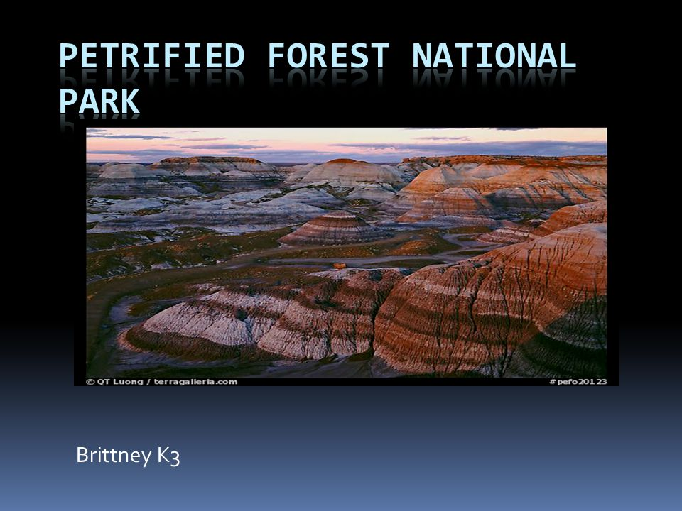 Petrified Forest National Park is about 341 square feet or 93,533 acres.