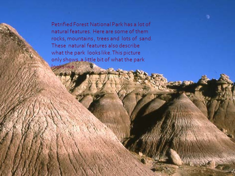Petrified Forest National Park has a lot of natural features.