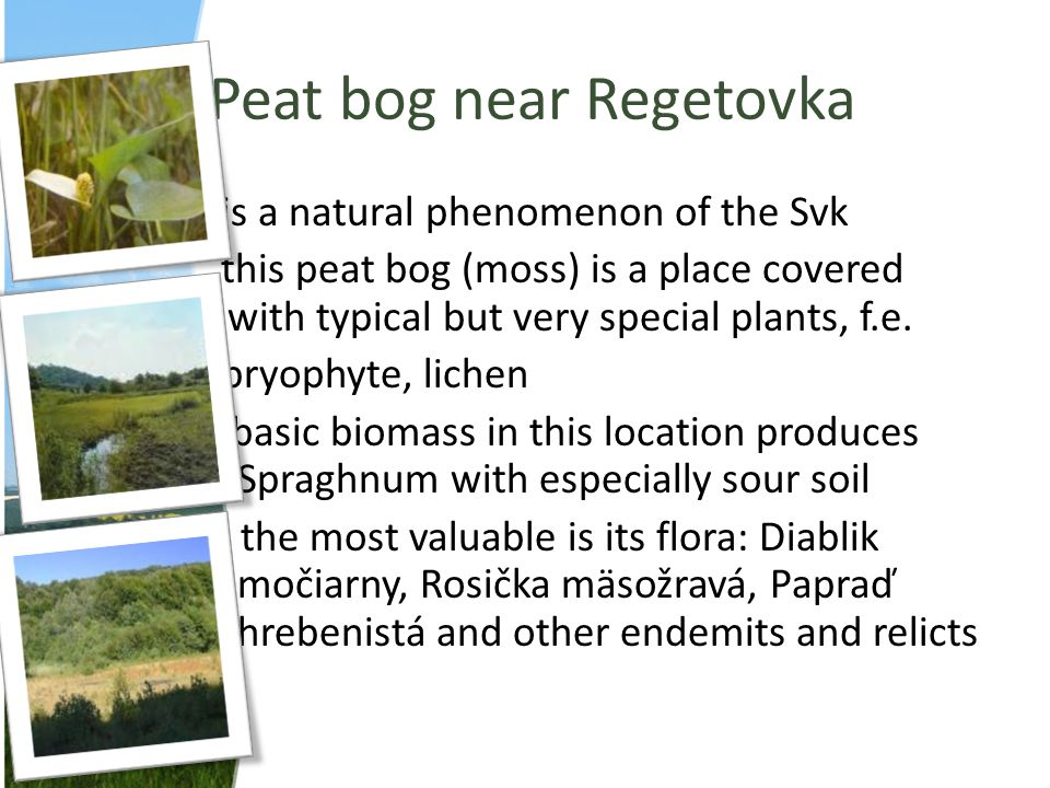 Peat bog near Regetovka is a natural phenomenon of the Svk this peat bog (moss) is a place covered with typical but very special plants, f.e. bryophyt