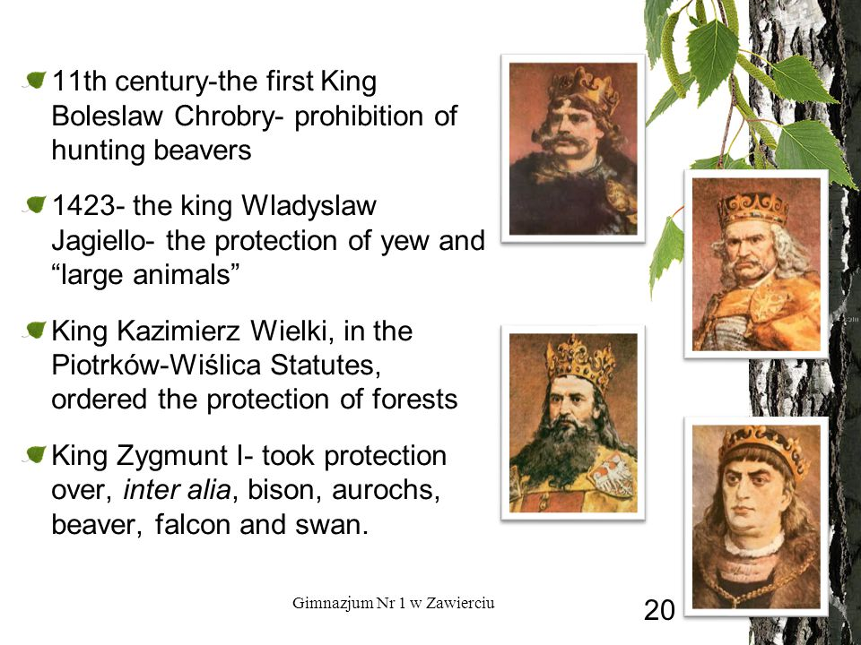 11th century-the first King Boleslaw Chrobry- prohibition of hunting beavers the king Wladyslaw Jagiello- the protection of yew and large animals King Kazimierz Wielki, in the Piotrków-Wiślica Statutes, ordered the protection of forests King Zygmunt I- took protection over, inter alia, bison, aurochs, beaver, falcon and swan.