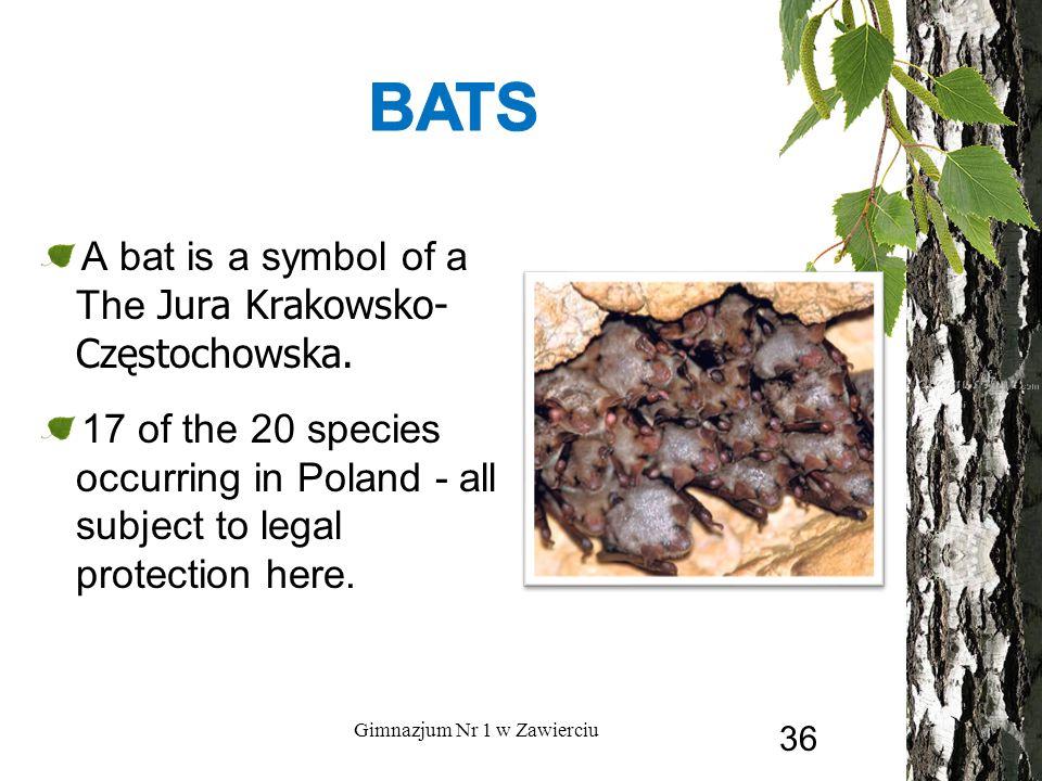 A bat is a symbol of a The Jura Krakowsko- Częstochowska.