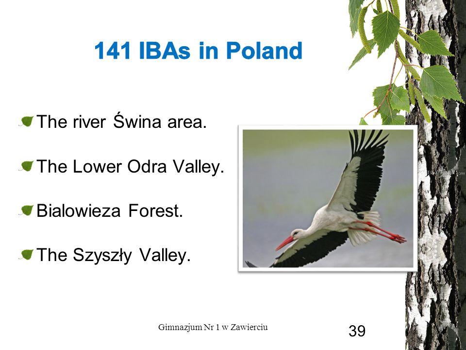 The river Świna area.The Lower Odra Valley. Bialowieza Forest.