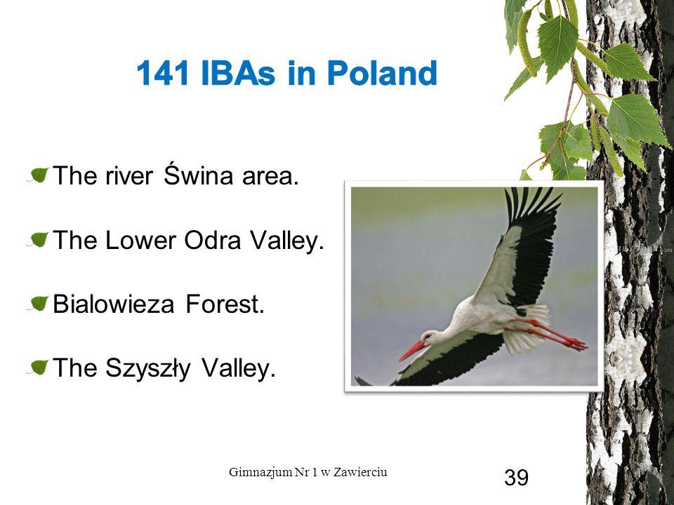 The river Świna area. The Lower Odra Valley. Bialowieza Forest. The Szyszły Valley. Gimnazjum Nr 1 w Zawierciu 39