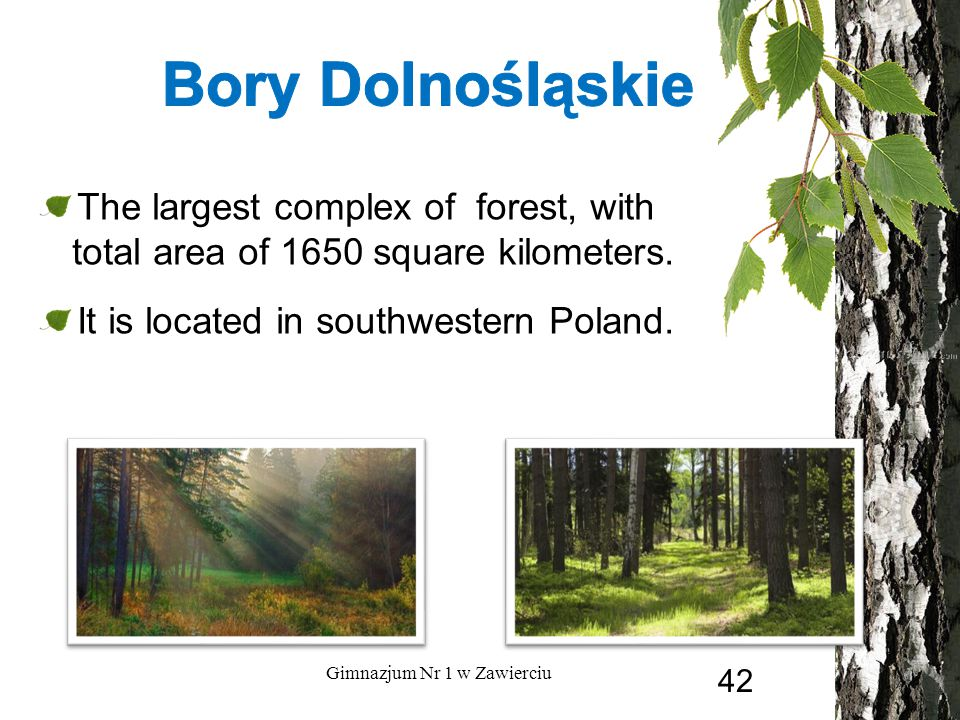 The largest complex of forest, with total area of 1650 square kilometers. It is located in southwestern Poland. Gimnazjum Nr 1 w Zawierciu 42