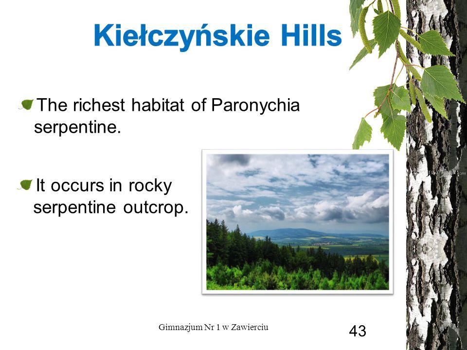 The richest habitat of Paronychia serpentine. Gimnazjum Nr 1 w Zawierciu It occurs in rocky serpentine outcrop. 43
