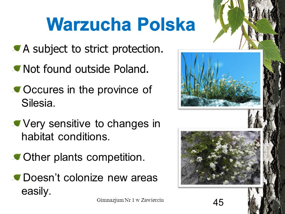 A subject to strict protection. Not found outside Poland. Occures in the province of Silesia. Very sensitive to changes in habitat conditions. Other p
