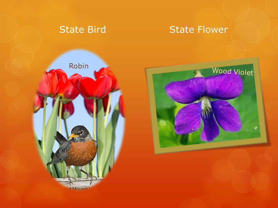State BirdState Flower Robin Wood Violet