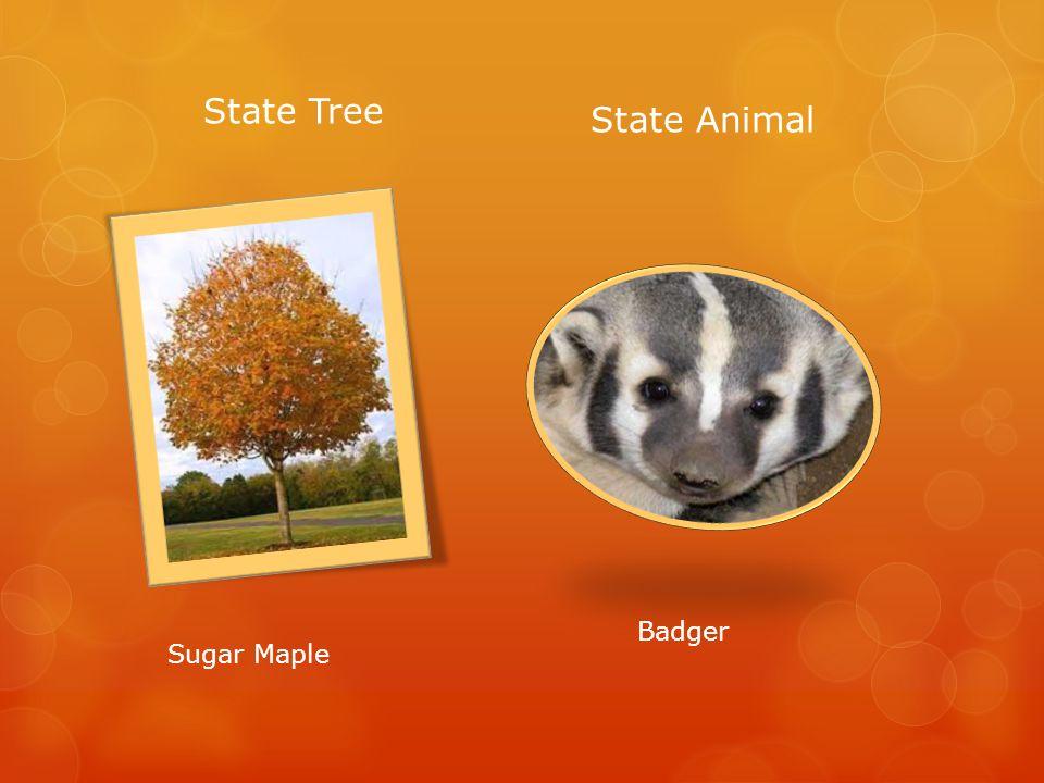 State Tree State Animal Badger Sugar Maple