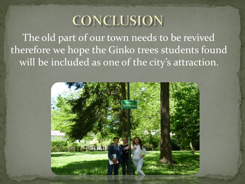 The old part of our town needs to be revived therefore we hope the Ginko trees students found will be included as one of the citys attraction.