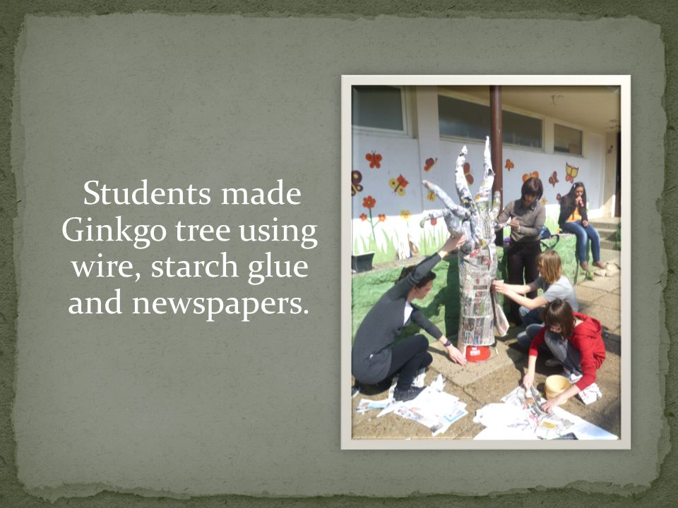 Students made fan- shaped leaves, wrote the information about the founding site, growth, reproduction and health benefits in the leaves which they glued on the three afterwards.