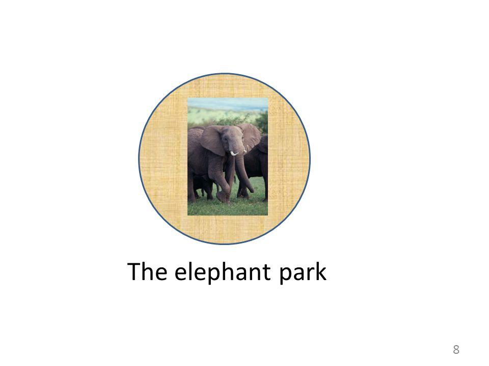 The elephant park 8